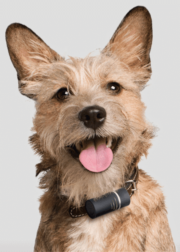 keep your dog safe and fit with these smart collars and gps trackers 2 - Keep your dog safe and fit with these smart collars and GPS trackers