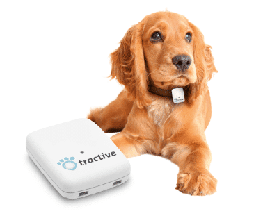 keep your dog safe and fit with these smart collars and gps trackers - Keep your dog safe and fit with these smart collars and GPS trackers