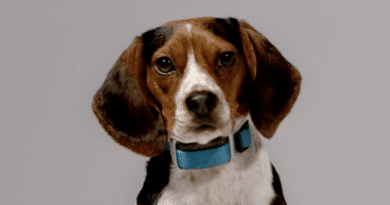 Animal rights activists outraged over Garmin's new wearable for dogs