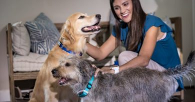 Garmin's new activity tracker and training device for your dog