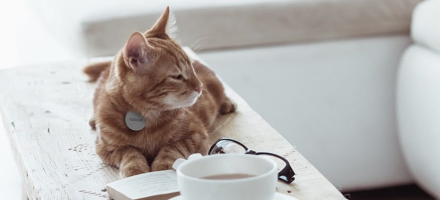 the best tracking devices and smart collars for cats 2 - The best tracking devices and smart collars for cats