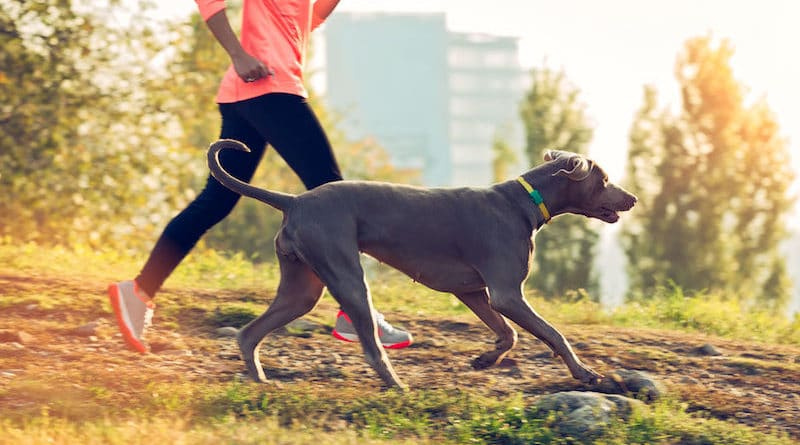 Fitbark, the Fitbit for your dog