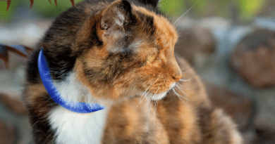 Scollar Mini: smart collar for cats and small dogs