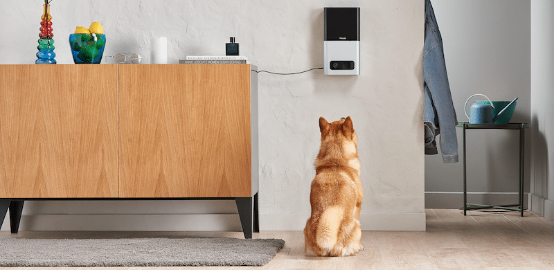five cool gadgets to help with training your pet - Five cool gadgets to help with training your pet