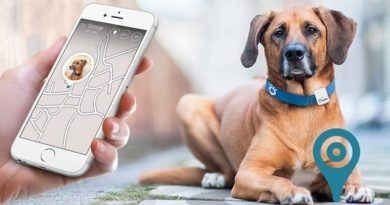 Keep your dog safe and fit with these smart collars and GPS trackers