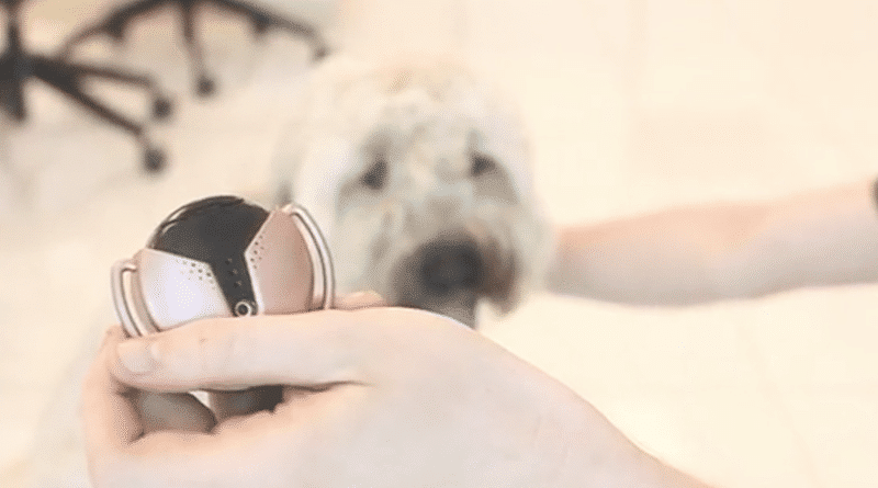 Moxie: stay in touch with your furry friend