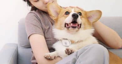 Xiaomi's PetBit is the MiBand for pets