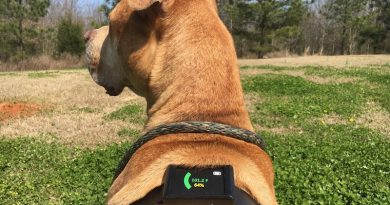Dawg Tag: the first wearable core temperature sensor for dogs