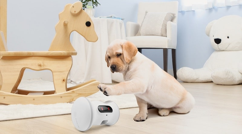 VARRAM Pet Fitness: a smart robot for your pet