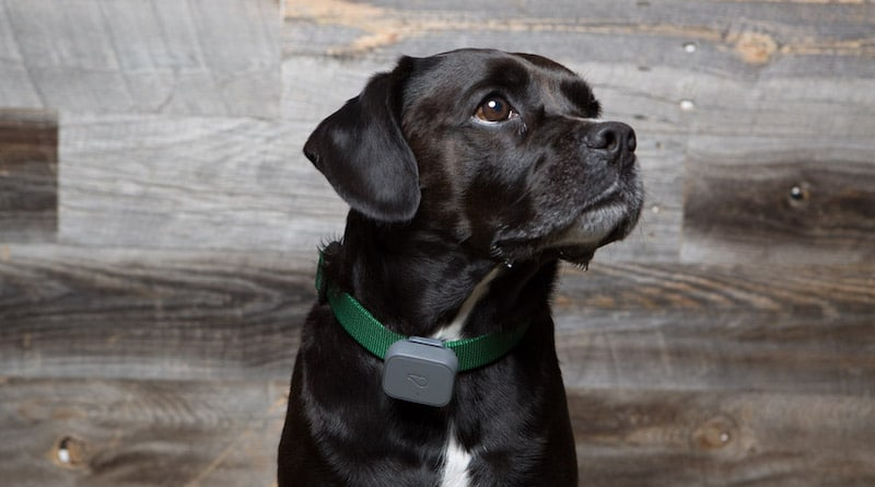 Half of Britain's dogs are overweight or obese, wearable tech can help