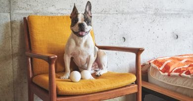 GOMI: the interactive smart ball for your pet
