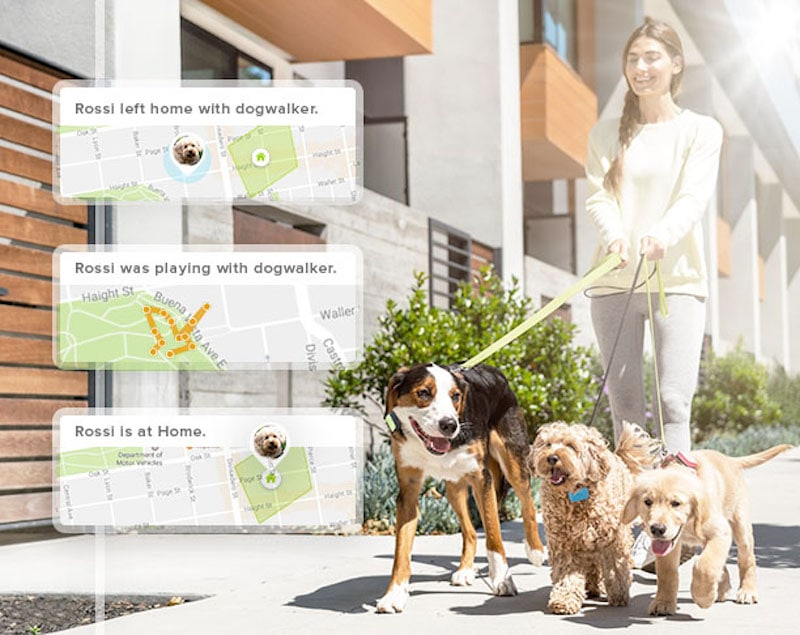 whistle s pet tracker just got better - Whistle's pet trackers now monitor sleep, licking and scratching