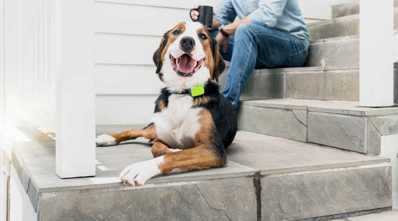 Whistle's pet trackers now monitors sleep, licking and scratching
